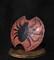 ダクソ3盾31蜘蛛の盾-s.jpg
