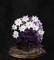 ダクソ3道具_19_毒紫の花苔玉-s.jpg