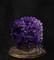 ダクソ3道具_18_毒紫の苔玉-s.jpg
